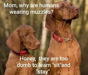 wearing-muzzle