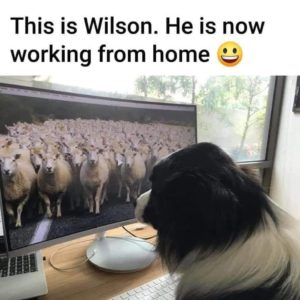 wilson-working-from-home