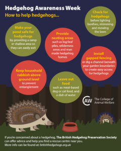 hedgehog-awareness-week-infographic-how-to-help-hedgehogs3