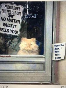 persuasive-cat
