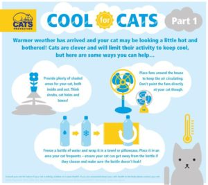 cats-in-hot-weather-1