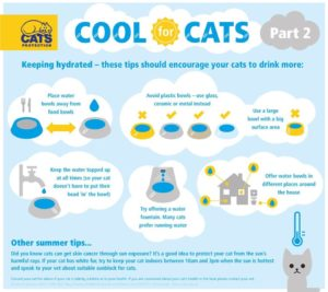 cats-in-hot-weather