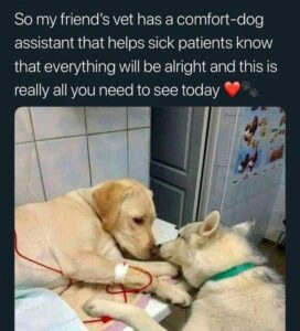 comfort-dog
