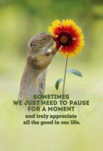 appreciate-good-things
