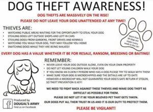 dog-theft