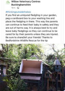 uninjured-birds