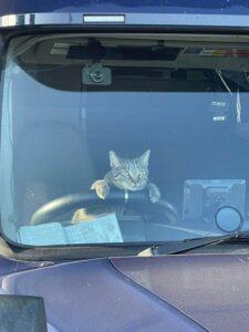 cat-driving-truck