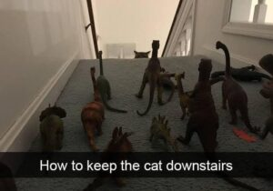 how-to-keep-the-cat-downstairs